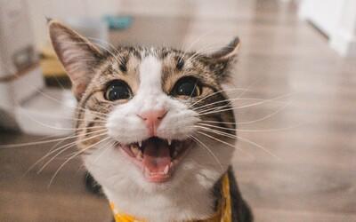 Ľudia chcú meniť mačky a psov na vegánov. Novodobý trend ich môže ohrozovať na živote