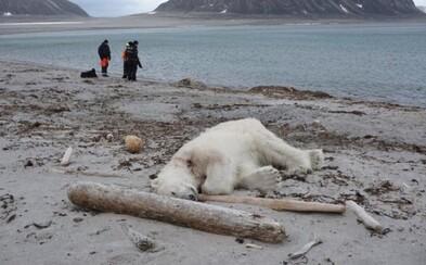 Ľudia z výletnej lode v Nórsku zastrelili ohrozeného ľadového medveďa. V snahe zachrániť turistu sa zachovali radikálne