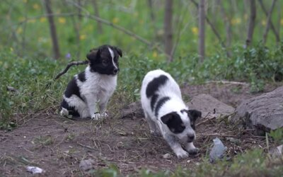 Ľudia zachraňujú rádioaktívnych psíkov z Černobyľu. Po dekontaminácii si ich môžeš adoptovať