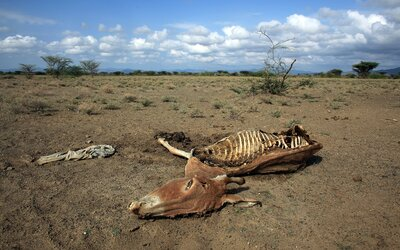 Ľudstvo od roku 1970 vyhladilo 60 % zvierat