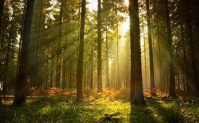 Má Národný park Podunajsko zmysel? A ako za planétu bojujú najodvážnejší ochranári? Načerpaj inšpiráciu od svetových osobností