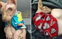 Mačka bez srsti a očí pobláznila celý internet