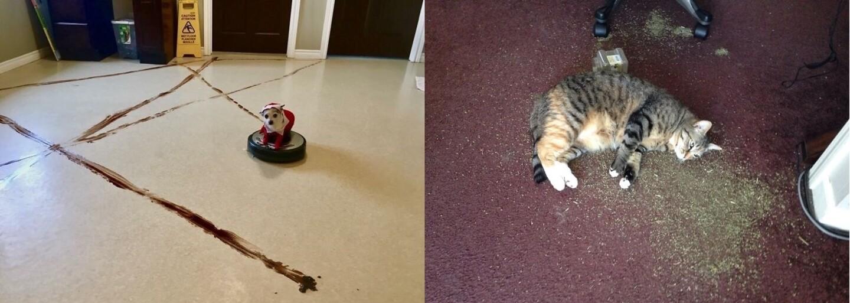 Mačka pod vplyvom marihuany či výkal roznesený po celej izbe. Internet sa podelil o katastrofické scenáre, keď nechali zvieratá samé doma