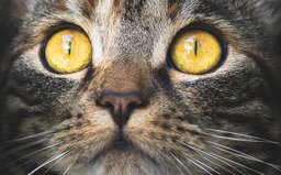 Mačky nemajú problém ani s ľudským mäsom. Ohlodali mŕtvolu človeka až na kosť
