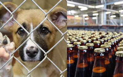 Maďarský pivovar ti venuje špeciálnu prepravku piva, ak si adoptuješ jedného z psíkov nedaľekého útulku
