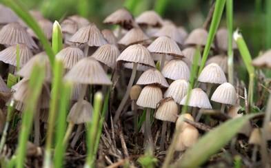 Magické huby majú hromady zdravotných benefitov, tvrdia vedci. Riskuješ však psychózy