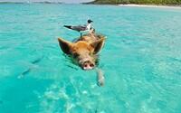 Majetná rodina nabízí mzdu 2,7 milionu korun ročně dvojici, která se jí bude starat o soukromý ostrov na Bahamách