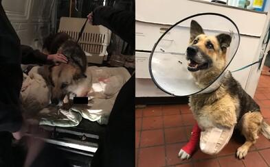 Majiteľ nechal psa priviazaného na dvore bez vody a jedla. Kvôli bolestiam si odhryzol a zjedol vlastnú nohu