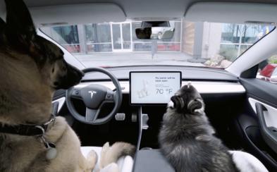 Majitel Tesly nechal psa v autě s běžící klimatizací. Osvobodil ho až soud