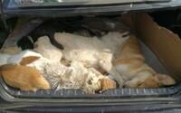 Majiteľa reštaurácie chytili s 8 zabitými psami v kufri auta. Ukradol ich a chcel z nich urobiť obľúbenú pochúťku