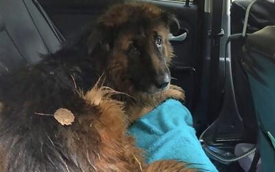 Majitelia chceli utratiť psa, no namiesto toho ho pochovali zaživa. Nemecký ovčiak sa vykopal z vlastného hrobu