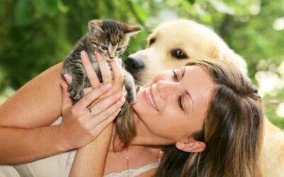 Majitelia mačiek sú múdrejší ako majitelia psov, tvrdia vedci