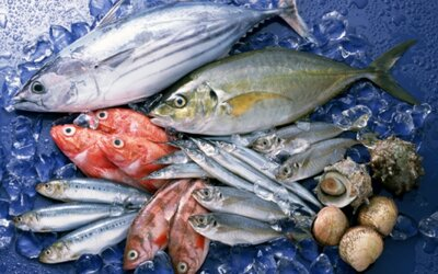 Mali by sme prestať konzumovať ryby kvôli nebezpečnej ortuti?