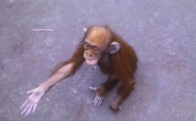 Maličký šimpanz zúfalo plakal a žobral, aby mu ľudia pomohli. Žil bez jedla či vody uväznený v dome dedinčana z Konga