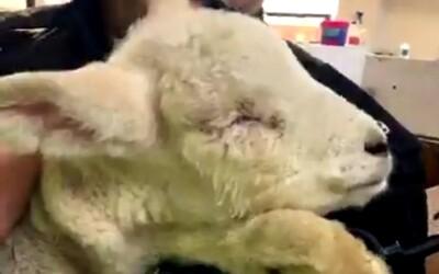 Malú ovečku zbili a vypichli jej oči. 12-ročné dievčatá sa vraj pri sledovaní tyranov iba smiali