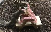 Mama stratila pre koronavírus prácu, tak začala vyrábať piknikové stoly pre veveričky. Má stovky zákaziek z celého sveta