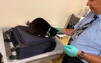Manželé byli v šoku. Letištní kontrola v jejich kufru objevila živou kočku