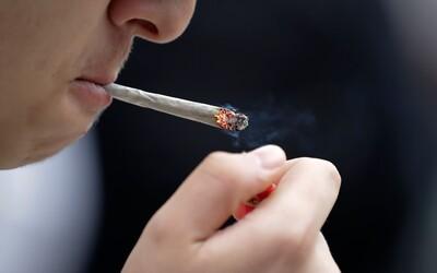 Marihuana může nahradit léky proti bolesti. Studie tvrdí, že je konopí efektivnější