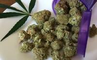 Marihuanová společnost si koupila celé americké město, aby ho proměnila v zelený ráj. Přilákat chce milovníky konopí z celého světa