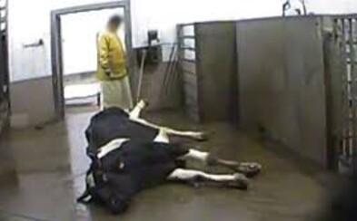 Maso z nemocných polských krav se dostalo i do Česka