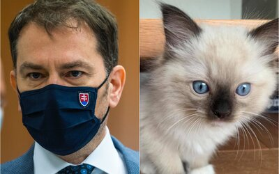 Matovič sa na Facebooku pochválil 800-eurovou mačkou, ktorú si kúpili do rodiny