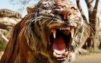 Maugli, Shere Khan a nebezpečenstvá v dobrodružnom traileri pre Knihu džunglí