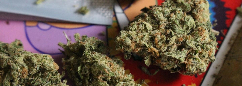 Medicínska marihuana nepredstavuje pre ľudí žiadne riziko, vyhlásila Svetová zdravotnícka organizácia. Tabu sa konečne prelomilo