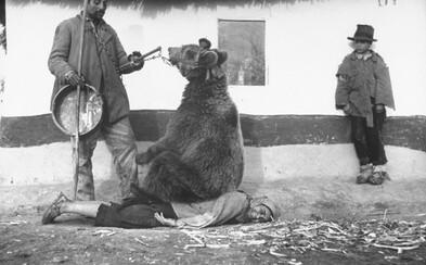 Medveď liečiaci bolesti chrbta. Neobyčajné historické zábery ukazujú rôzne oblasti života v minulosti