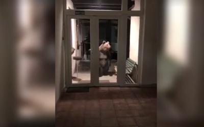 Medvěd navštívil policejní stanici ve Vysokých Tatrách. Přišel přímo před dveře