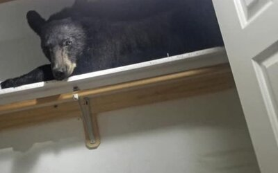 Medveď sa vlámal do domu a potom unavený zaspal v šatníku, kde ho našli policajti