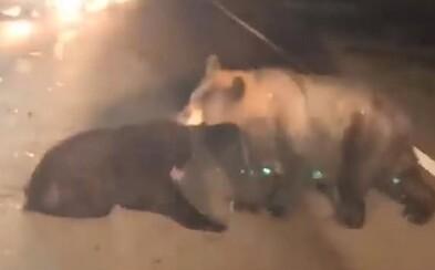 Medvede z cesty odťahovali zranené mláďa. Zachrániť ho už ale nedokázali
