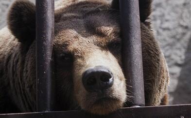 Medvedica bola za útoky na ľudí odsúdená na doživotie. V jej väzenskej cele sa nachádza aj bazén