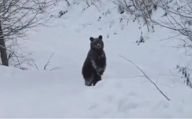 Medveďovi sa na rozkošnom videu milo prihovára lesník. Posiela ho spať, na čo mu zviera akoby odpovedalo