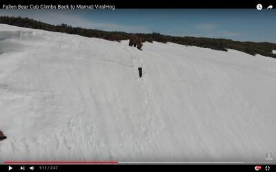 Medvídě padalo ze zasněženého svahu, drápalo se za matkou. Kvůli autorovi internetového virálu mohlo i zemřít