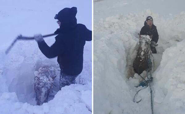 Extrémní vichřice na Islandu přinesla až dva metry sněhu. Místní museli vyhrabávat koně i dveře ke svým domům