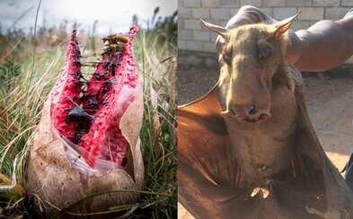 Mimozemské vajíčko či netopier pripomínajúci somára. Ľudia zdieľajú tie najbizarnejšie momentky z prírody