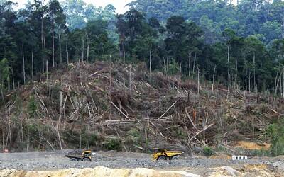 Míra odlesňování Amazonského pralesa za minulý rok vzrostla o 20 procent