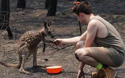 Mláďa kengury prišlo požiadať o pomoc tínedžera po tom, čo takmer zhorelo v austrálskych požiaroch