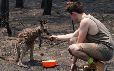 Mládě klokana přišlo požádat o pomoc teenagera poté, co téměř uhořelo v australských požárech