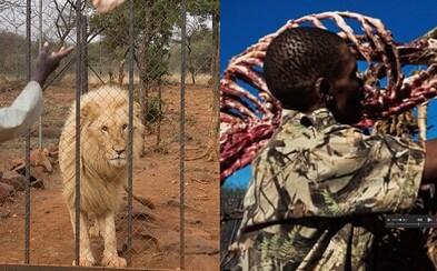 Mladého lva zastřelí v malém výběhu a domů si vezmou jeho lebku. Zbytek těla se za desetitisíce prodá jako léčivé předměty do Asie