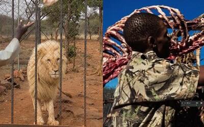 Mladého leva zastrelia v malom výbehu a domov si zoberú jeho lebku. Zbytok tela sa za desaťtisíce predá ako liečivé predmety do Ázie