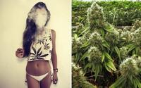 Mladí ľudia nefajčia viac marihuany po jej legalizácii. Zaujímavý výskum poukázal na to, že tínedžeri svoje návyky nijak výrazne nezmenili