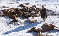 Mongolsko zasáhne přírodní katastrofa. 56 stupňů pod nulou a úhyn dobytka kočovnému životu neprospívá