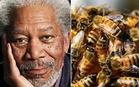Morgan Freeman proměnil svou obrovskou farmu na království pro včely. Chce je chránit