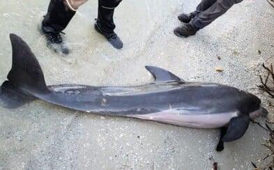 Mŕtvemu delfínovi vytiahli z tela polmetrovú sprchovaciu hadicu. Aj žalúdok mal plný plastu