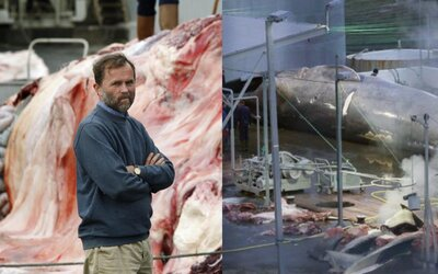 Multimilionár ulovil veľrybu a prisľúbil, že do konca leta zabije ďalších 150. Ich mäso pritom ani nemôže predávať