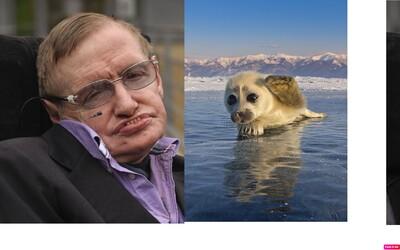Musíme opustiť Zem, inak vyhynieme my aj zvieratá, povedal Stephen Hawking. Nad jeho alarmujúcim odkazom by si sa mal zamyslieť