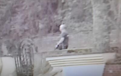 Muž, který venčil psa, jenž v Praze napadl čtyřletého chlapce, se přihlásil policii