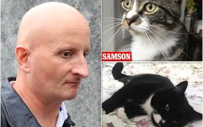 Muž z Británie dobodal šestnásť mačiek, deväť z nich neprežilo. Odsúdili ho na päť rokov väzenia