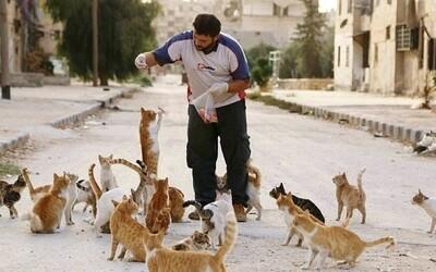 Muž z vojnou zničenej Sýrie používa svoju výplatu na to, aby nakŕmil 150 opustených mačiek